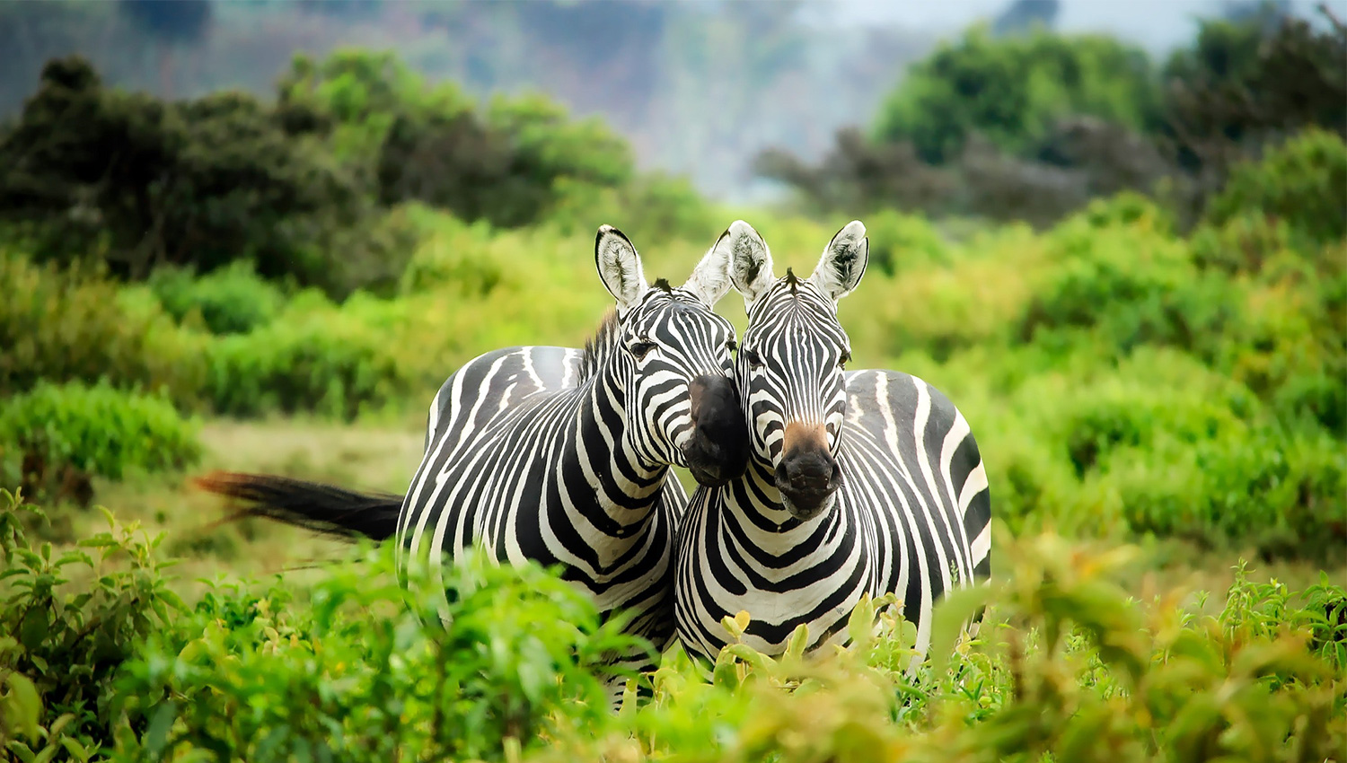 FIND YOUR SPECIAL TOUR TODAY WITH AFRICAN SAFARI AND PHOTO