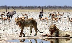 african photo safari etosha national park