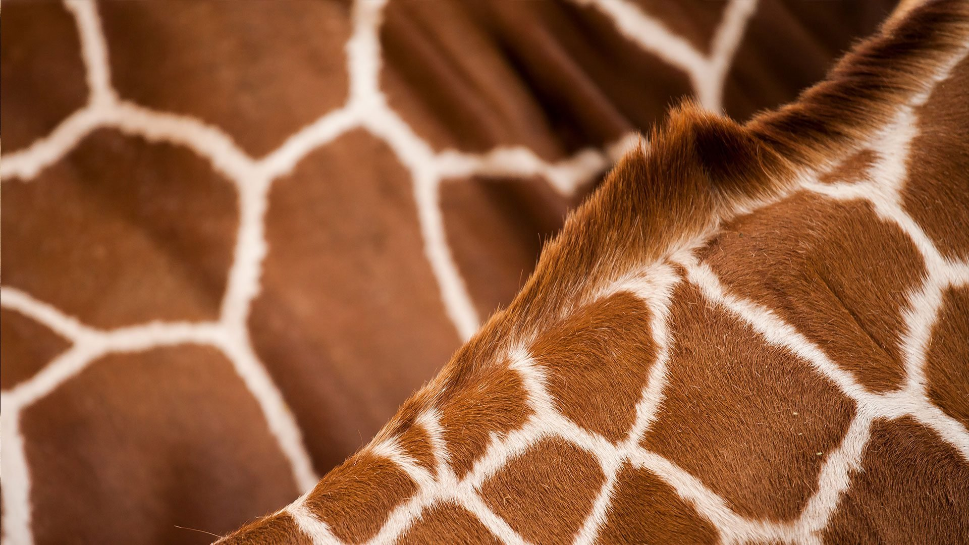 African Safari and Photo
