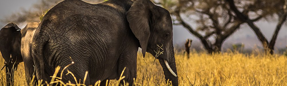 elephant hunt namibia 2020